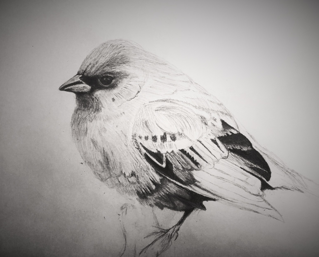 oiseau Guy