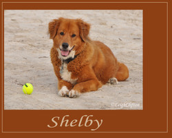 Untitled-1 shelby with presentation.jpg