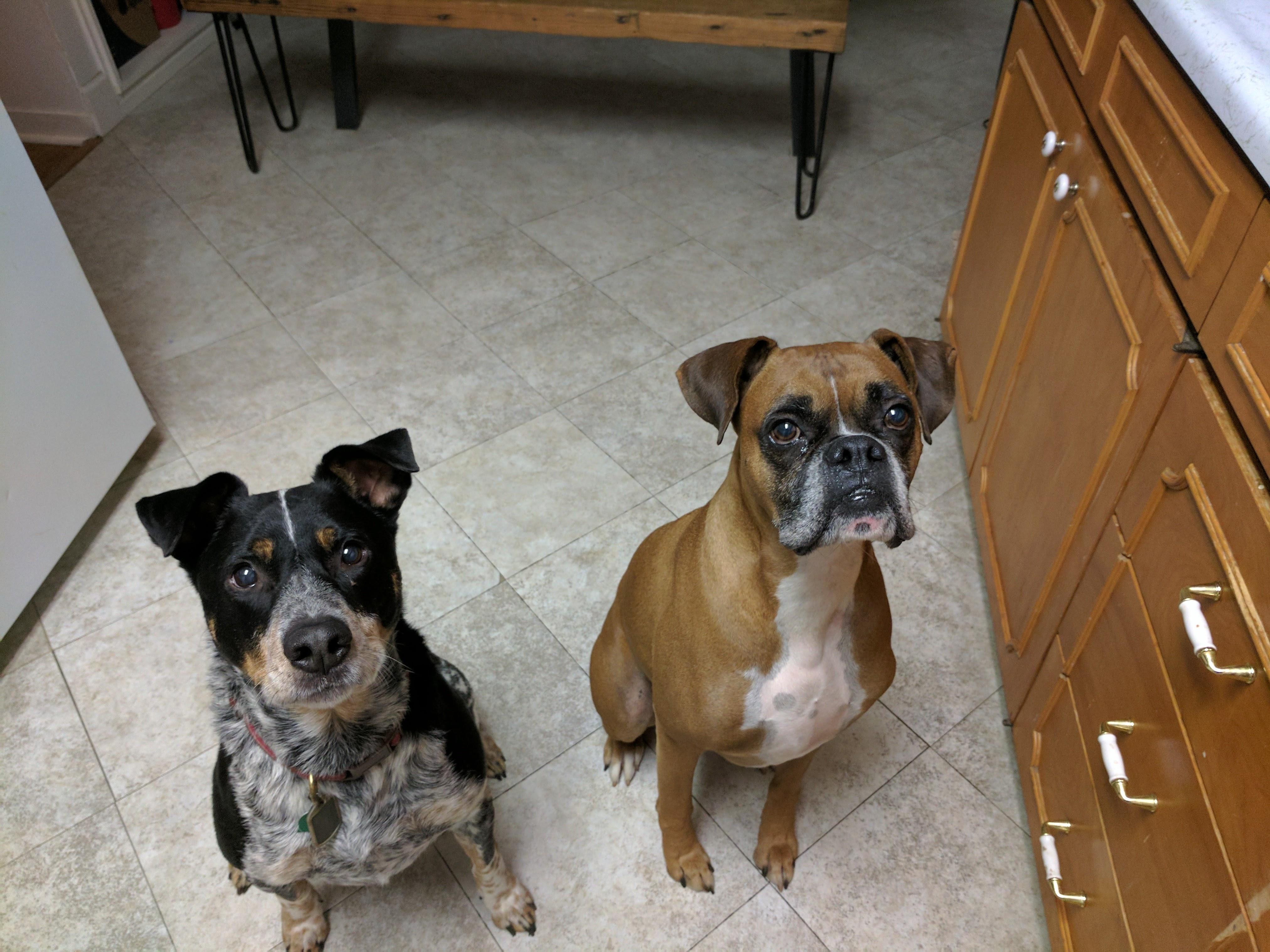 Roadie and Bo