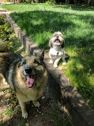 Reilly and Rufus enjoying some playtime in the backyard