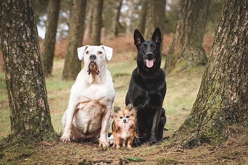 3 Dog Photo Session