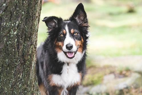 1 Dog Photo Session