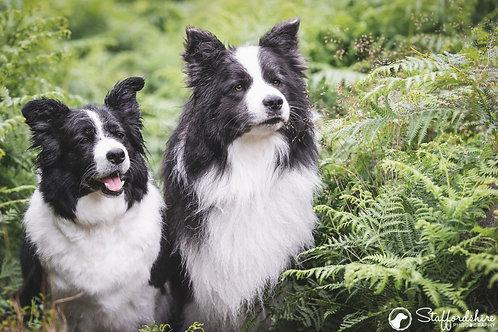 2 Dog Photo Session