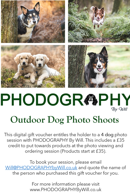 Digital Download Gift Voucher - 4 Dogs