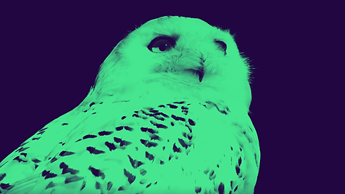 zoo_0001.png