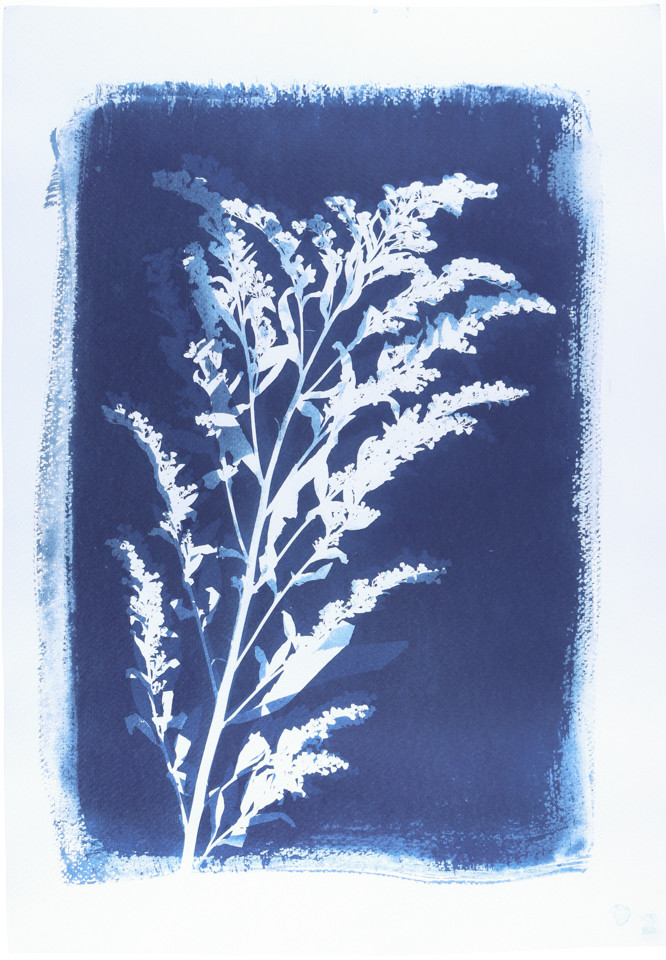 Cyanotype from 645 negative printed on Fabriano Art Paper