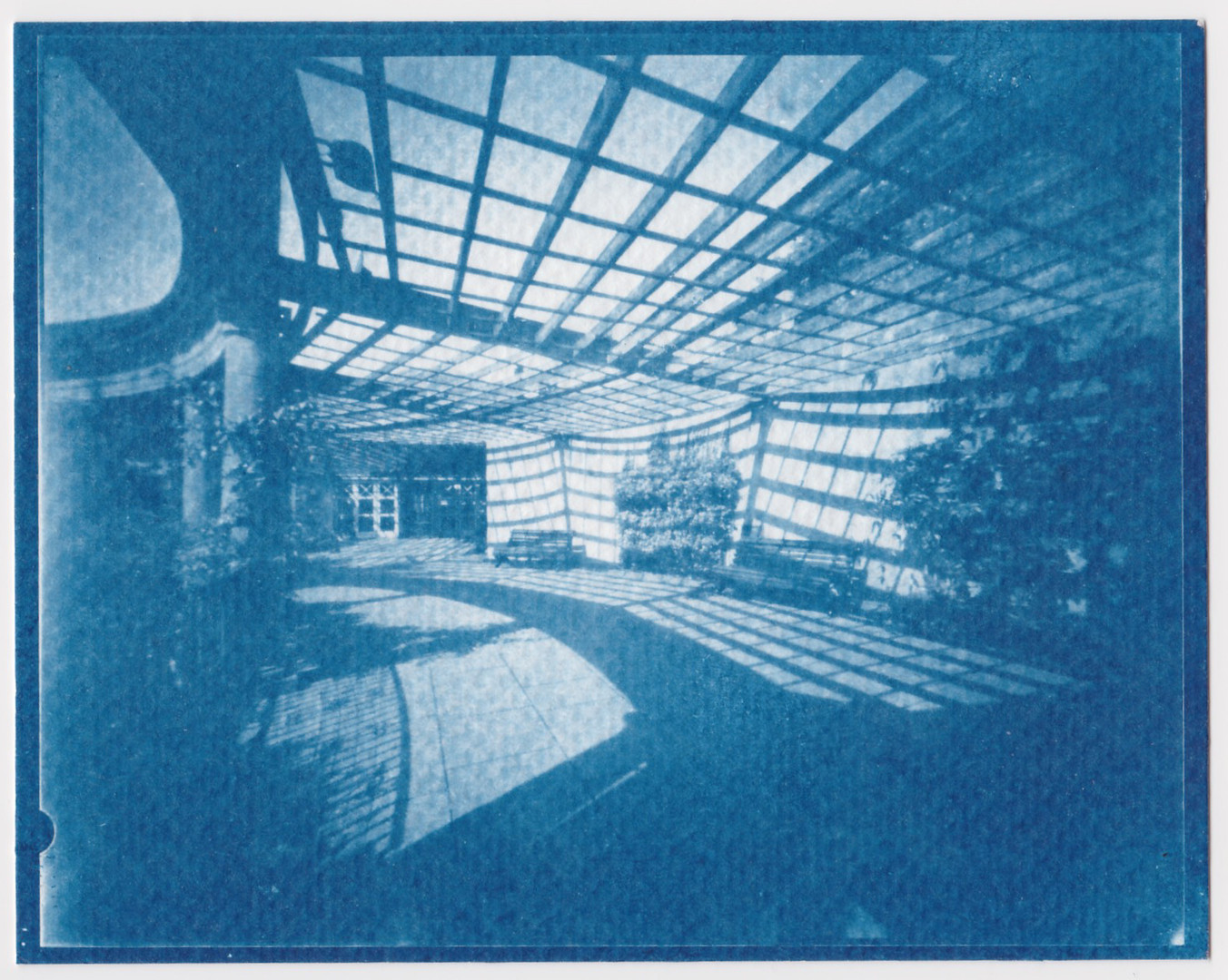 Cyanotype from 5x4 Negative