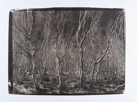 Liquid Light on Fabriano art paper