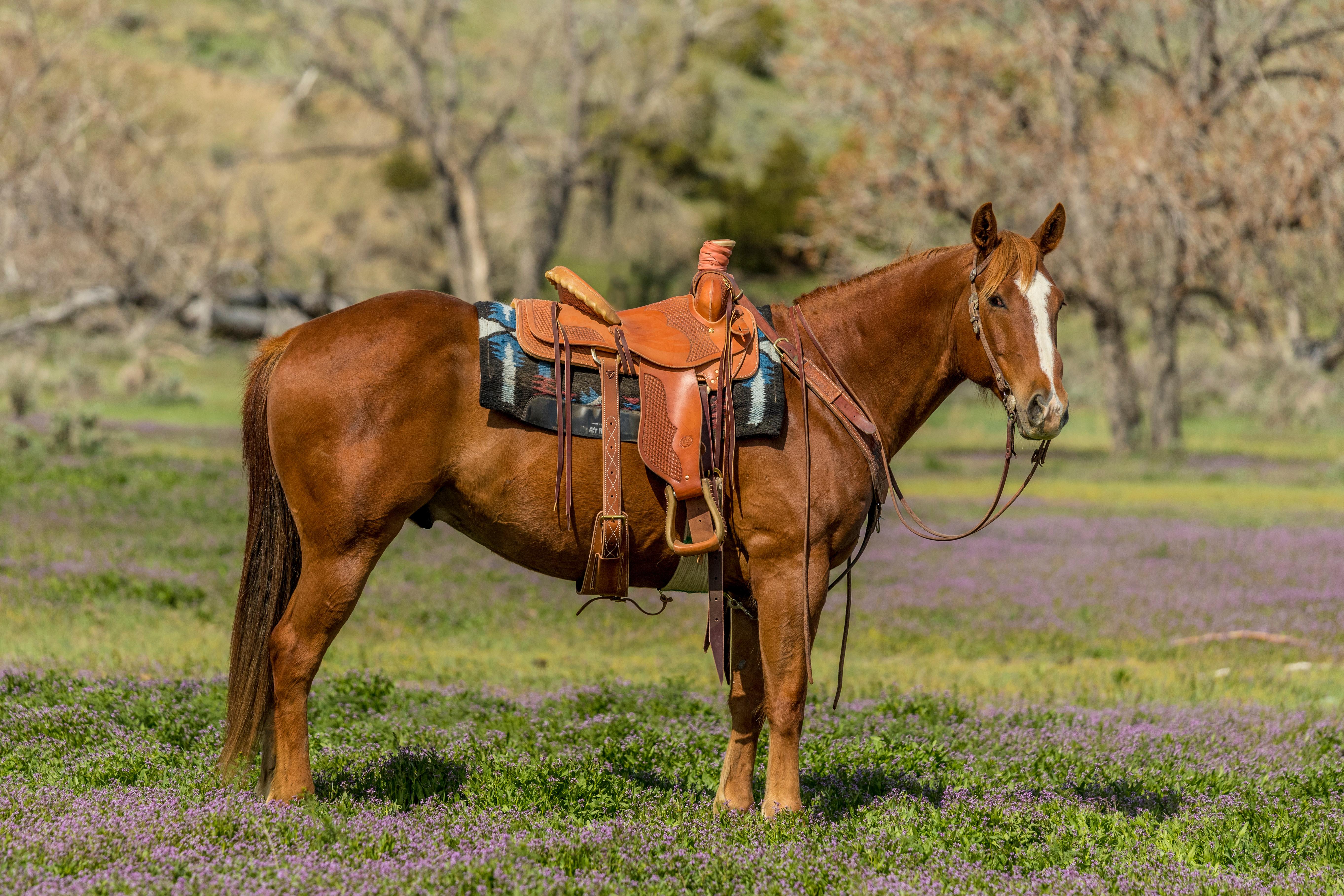Sale Horse Photos