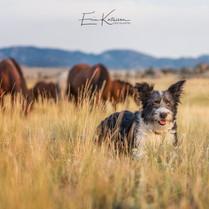 Edna the Idaho Shag