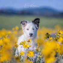 Eevey the Idaho Shag