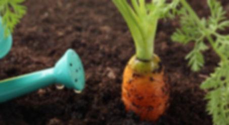 Купить плодородный грунт