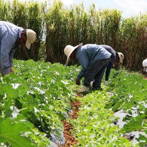 FAO: Hace falta más innovación para luchar contra el cambio climático, la pobreza y el hambre