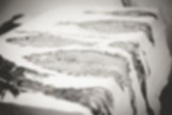 gyotaku planche.jpg