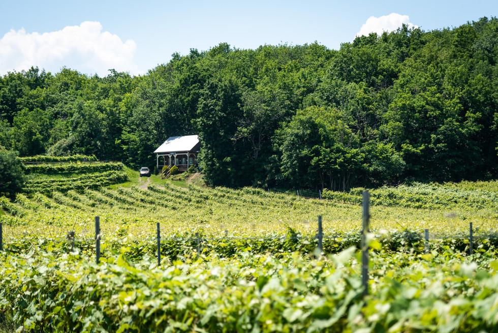 Vins du Québec