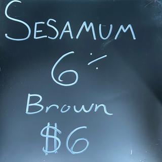 Sesamum.png