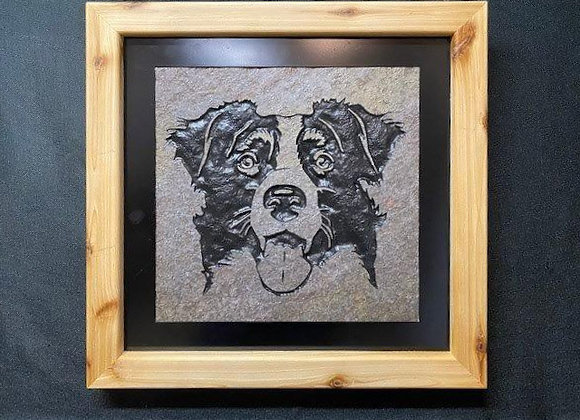 Face of Border Collie