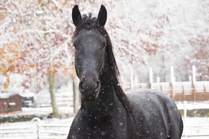Kai in Snow LQ.jpg