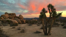 Joshua Tree- a quick but truly memorable stop.