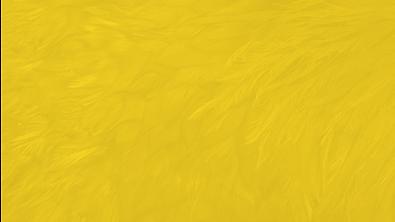 Textura-Cuco-Amarela---Wide.png