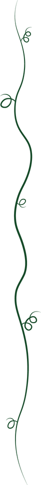 Border Assets - Dark Green Curls-10.png