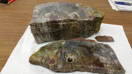 Petrified Wood Abrasive Water Jet Finish