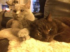 Anubis & Sirius