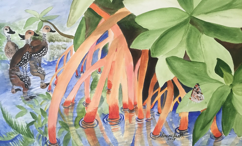 Westerly Ponds Mangroves