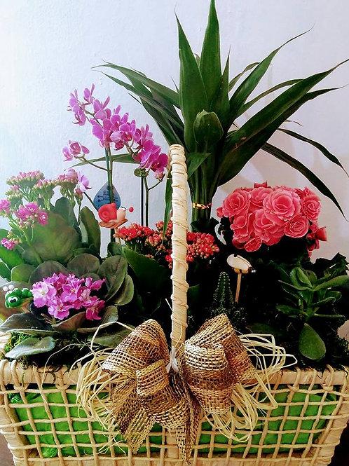 Cesta de Coquetel de Flores
