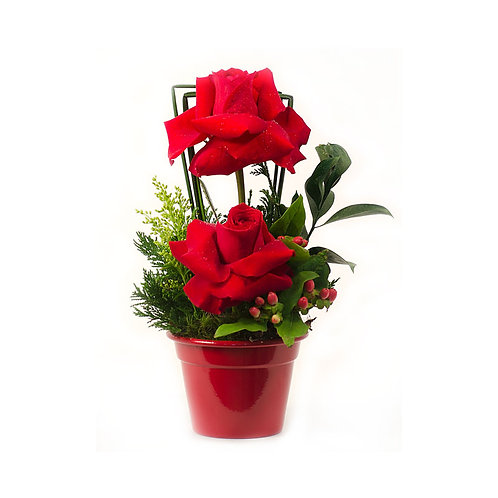 Balde com 2 rosas colombianas.