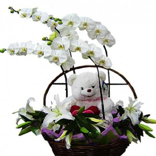 Cesta com  4 Orquídeas, Lírios e Urso.
