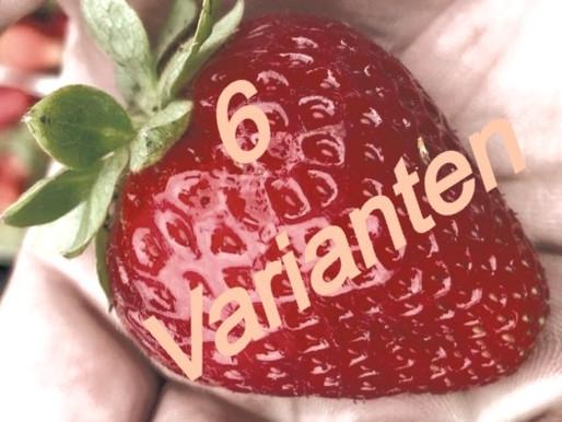 ANBAU-KOSTEN-VERGLEICH 6 Varianten im Test