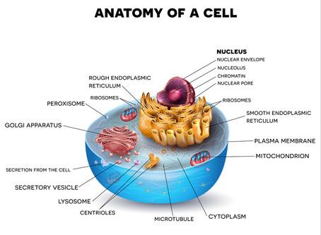 Von Zellen und Schönheit