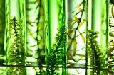 algae biofuel tube in biotech laboratory