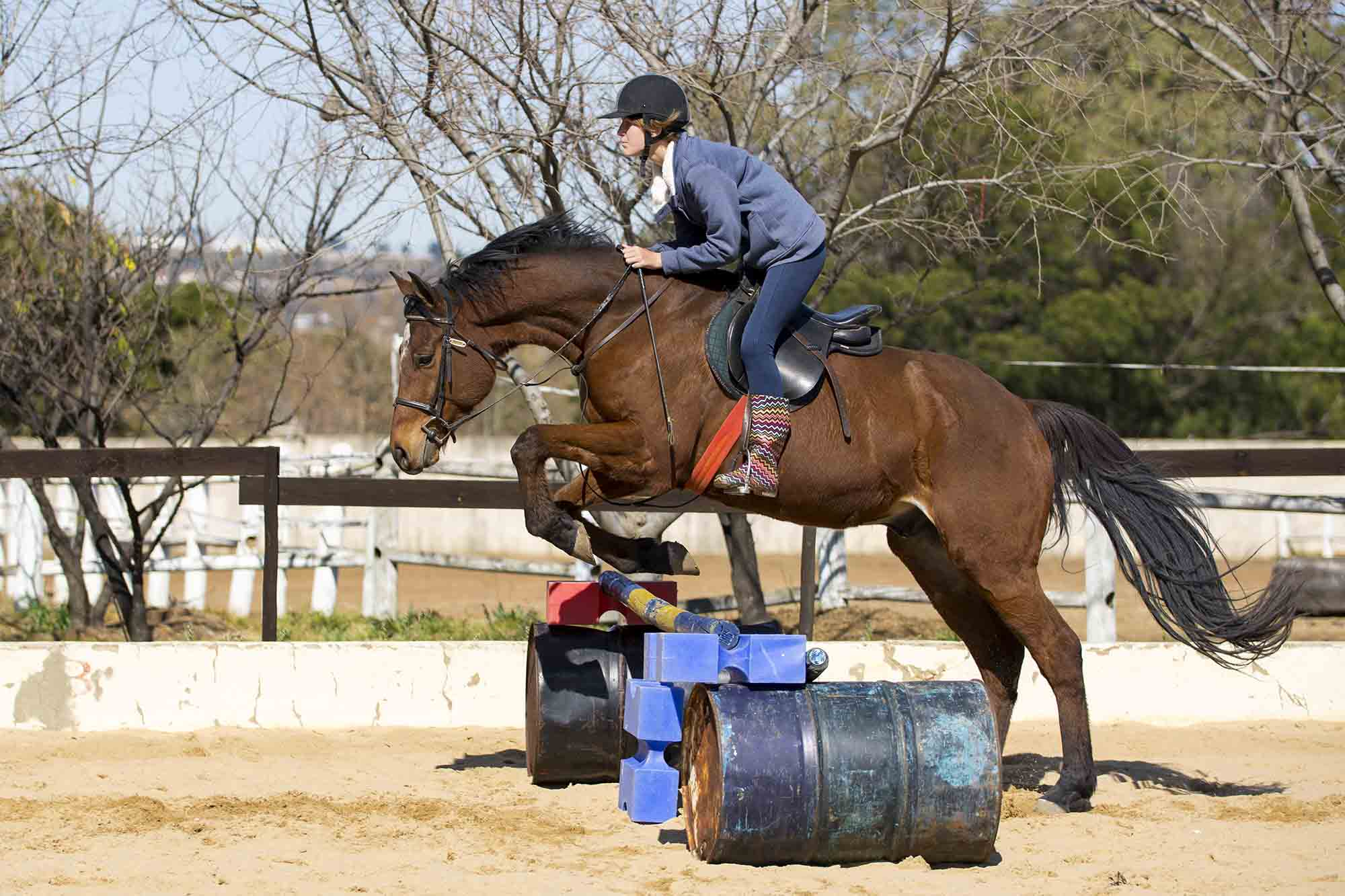 Capriole Stables riding lessons near Midstream and Centurion