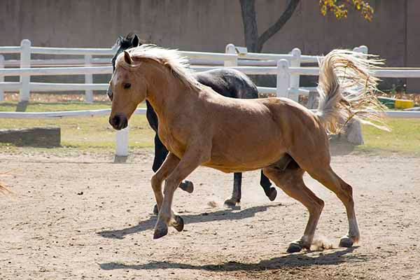Playful horses at Capriole Stables in Midrand