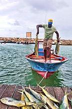 pêche à marie-galante