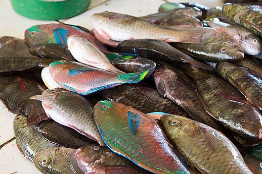 poisson perroquet.jpg