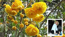 La Rose du Brésil à l'Hôtel Marie-Galante