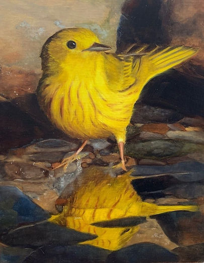 yellowwarbler.jpg