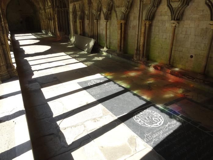 Damson Tree - lighting the cloister