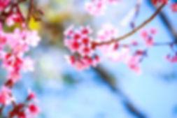 7777120920_le-printemps-est-la.jpg