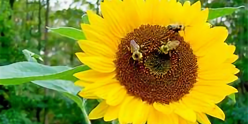 Dr. Kimberly Stoner: Wild about Bees!
