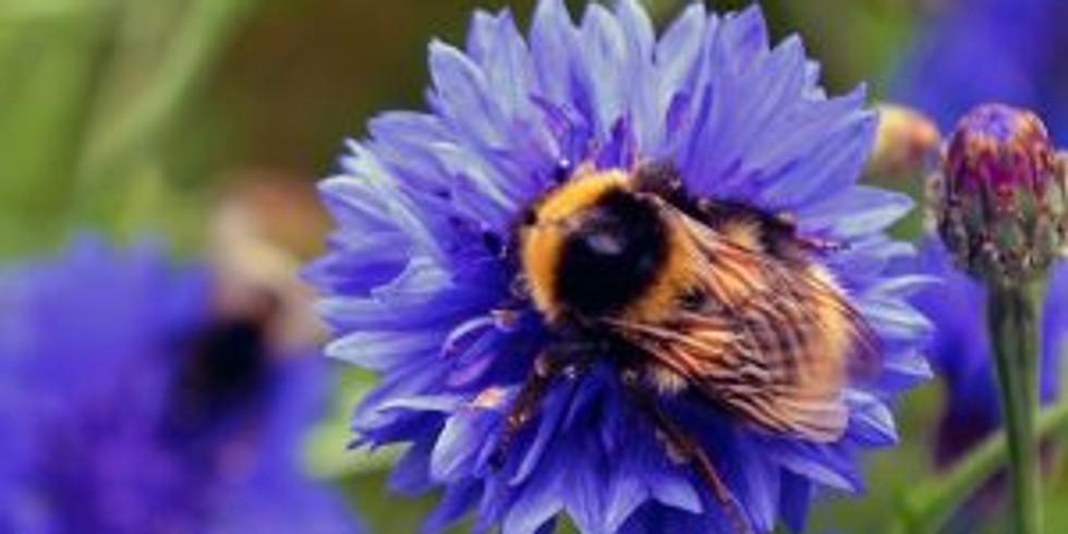 DIY Pollinator Pots