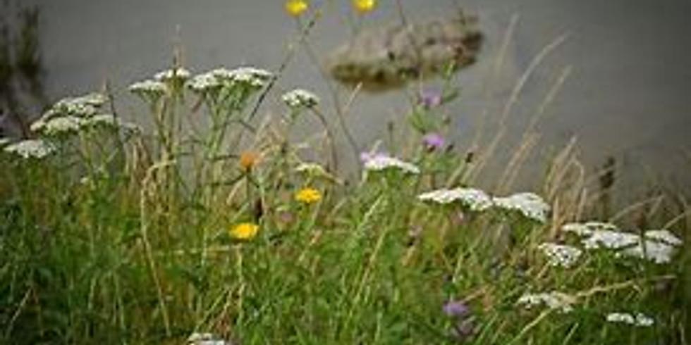 Pollinator Pathway Week: Pollinator Garden Tour at Earthplace