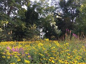 Silent Grove Meadow.jpg