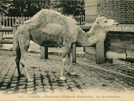 Верблюды на открытках. 26.03.2016 в 11:00