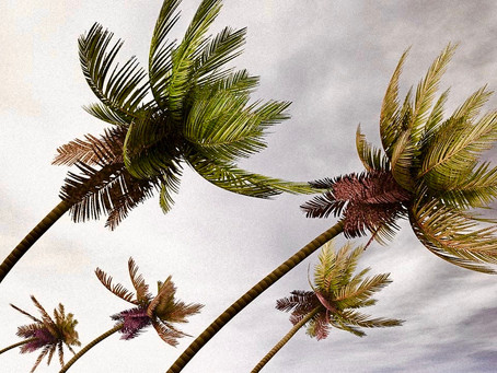 The Palm tree in the Storm