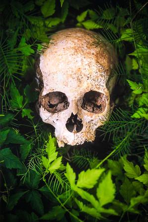 Skull in foliage.  Brazil