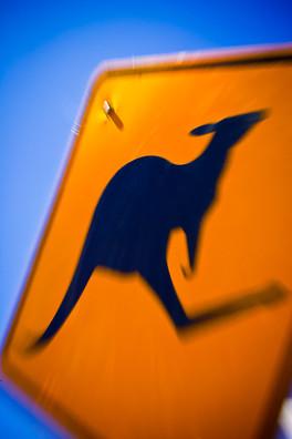 Kangaroo crossing.  Australia
